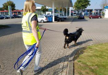 Dogs Can Do Mantrailen und Theratrailen rund um Mönchengladbach