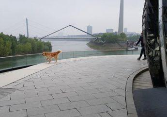 Mantrailen und Theratrailen rund um Mönchengladbach
