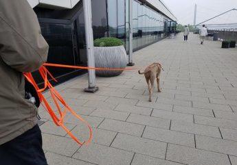 Immer der Nase nach - Mantrailing für Familienhunde